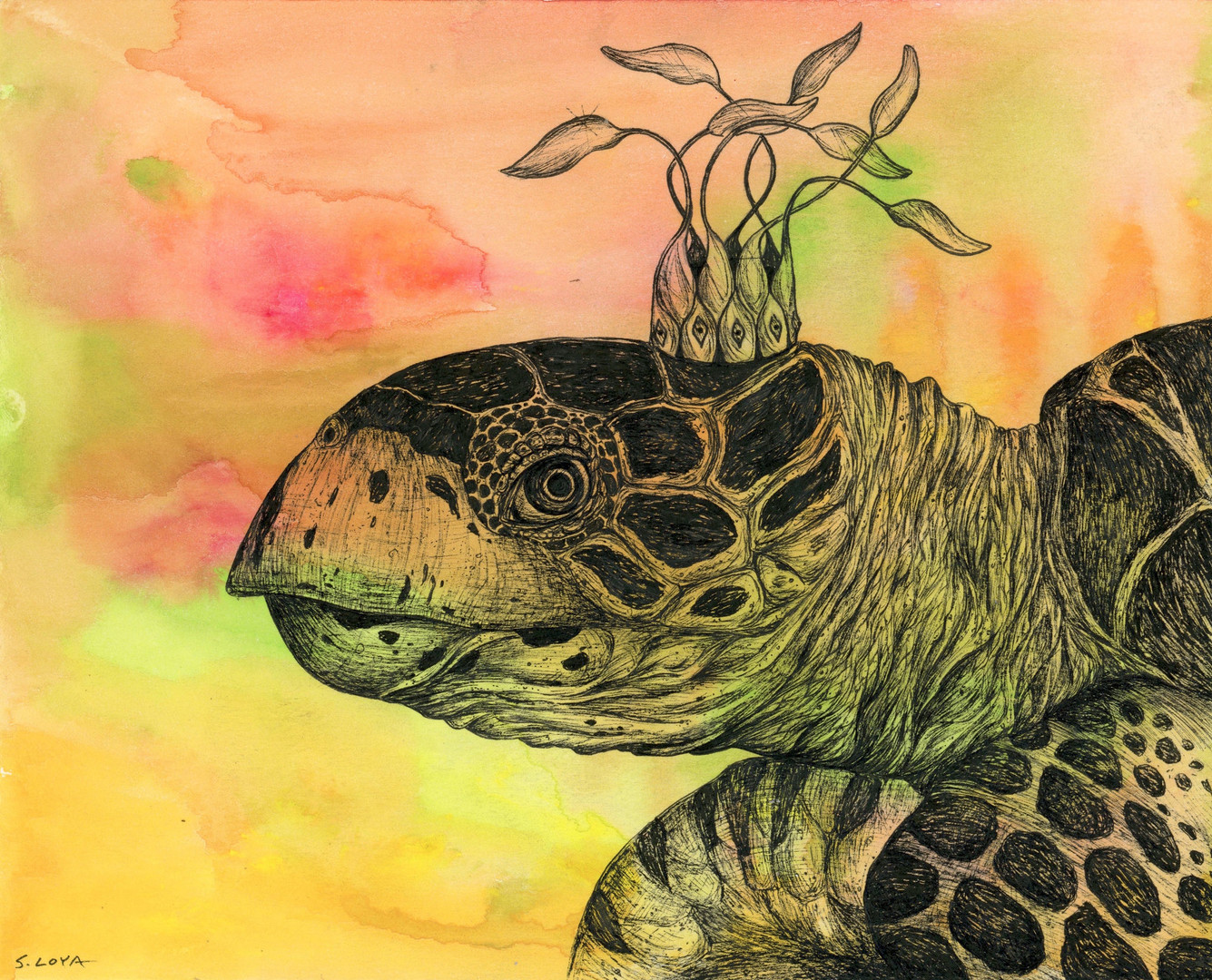 Endangered Kingdom series: Hawks Bill Sea Turtle