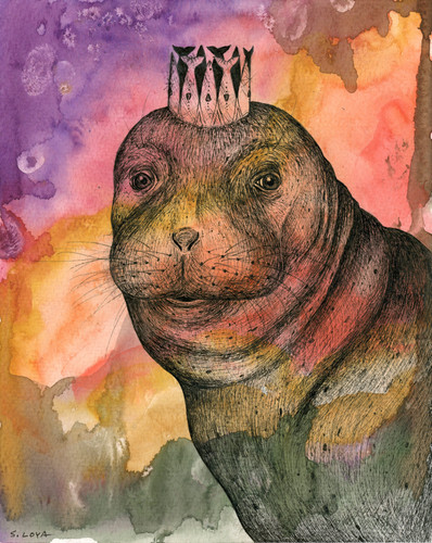 Endangered Kingdom series: Mediterranean Monk Seal