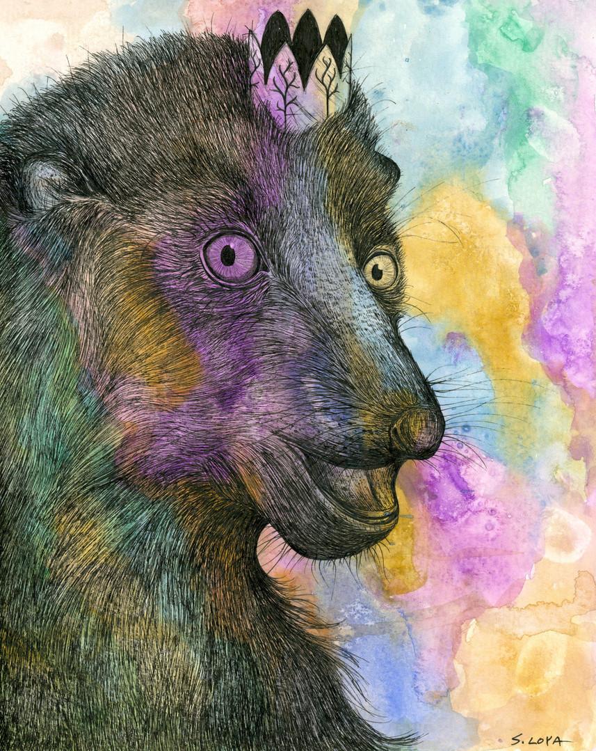Endangered Kingdom series: Blue-eyed Black Lemur