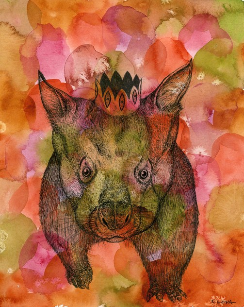 Endangered Kingdom series: Northern Hairy-nosed Wombat