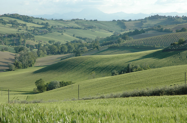 Our rolling hills in springtime