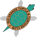 logo_color-1050.png