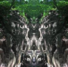 Forest Daze
