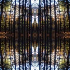 Forest Sine Wave