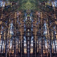 Infinity Pines