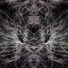 Holy Dendrites (pt 1)