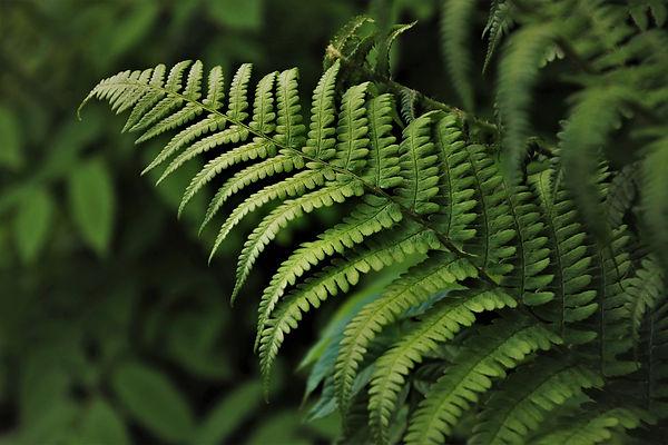 grow-4183977_1920.jpg