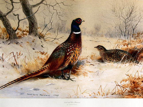 """Cock and Hen Pheasants"" by Archibald Thorburn"