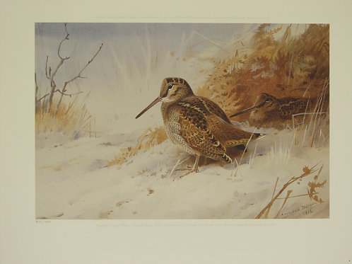 """Winter Woodcock"" by Archibald Thorburn"