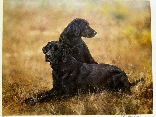 """""""Black Labrador 2"""" by Debbie Gillingham"""