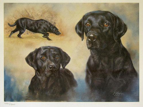 """""""Black Labrador 1"""" by Debbie Gillingham"""