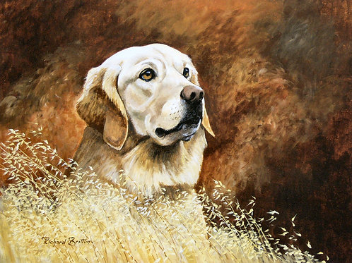 """""""Golden Retriever"""" by Richard Britton"""