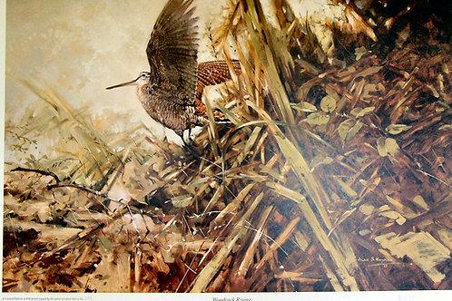 """Woodcock Rising"" by Alan Hayman"