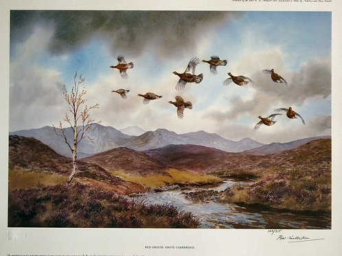 """Red Grouse above Carrbridge"" by R.W. Milliken"