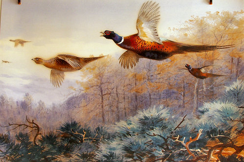 """Pheasants in Flight"" by Archibald Thorburn"