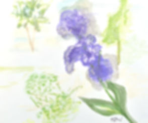 Purple%2520Iris_edited_edited.jpg
