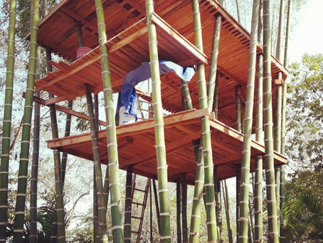 Bamboo Tree House. Living Platform