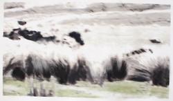 sheepfix04