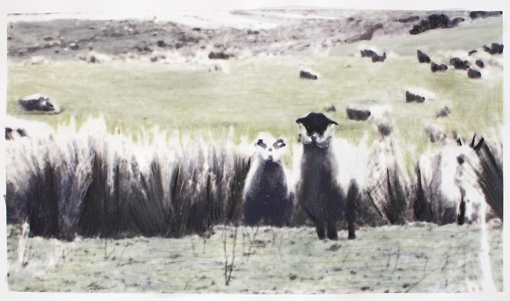 sheepfix03