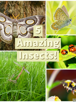 Top 5 Amazing Insects You Can Find In Your Garden