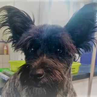Lange Ohren
