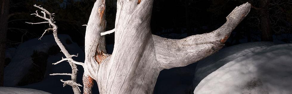 ZV21-Laponia01.jpg