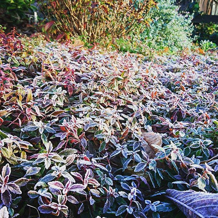 The #frost is coming.. It looks so #beau