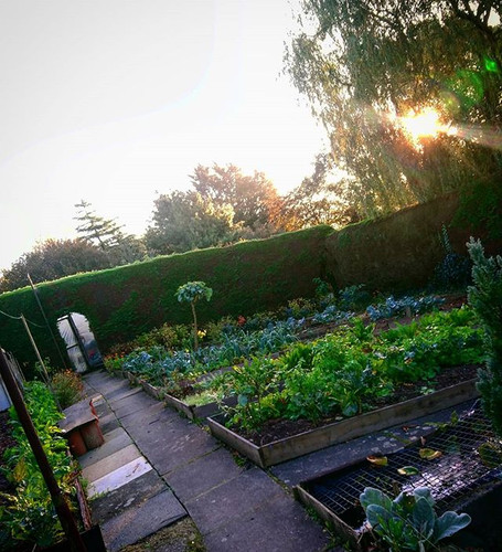 The vegetable garden caught in the morni