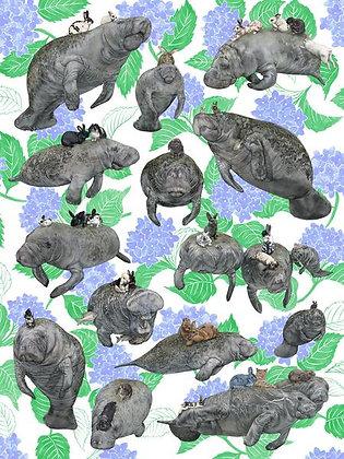 Vegans: Manatees 'n Bunnies