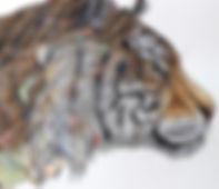 rn_tiger_original_edited.jpg