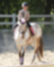 Horse Lessons near Santa Cruz for children and adults
