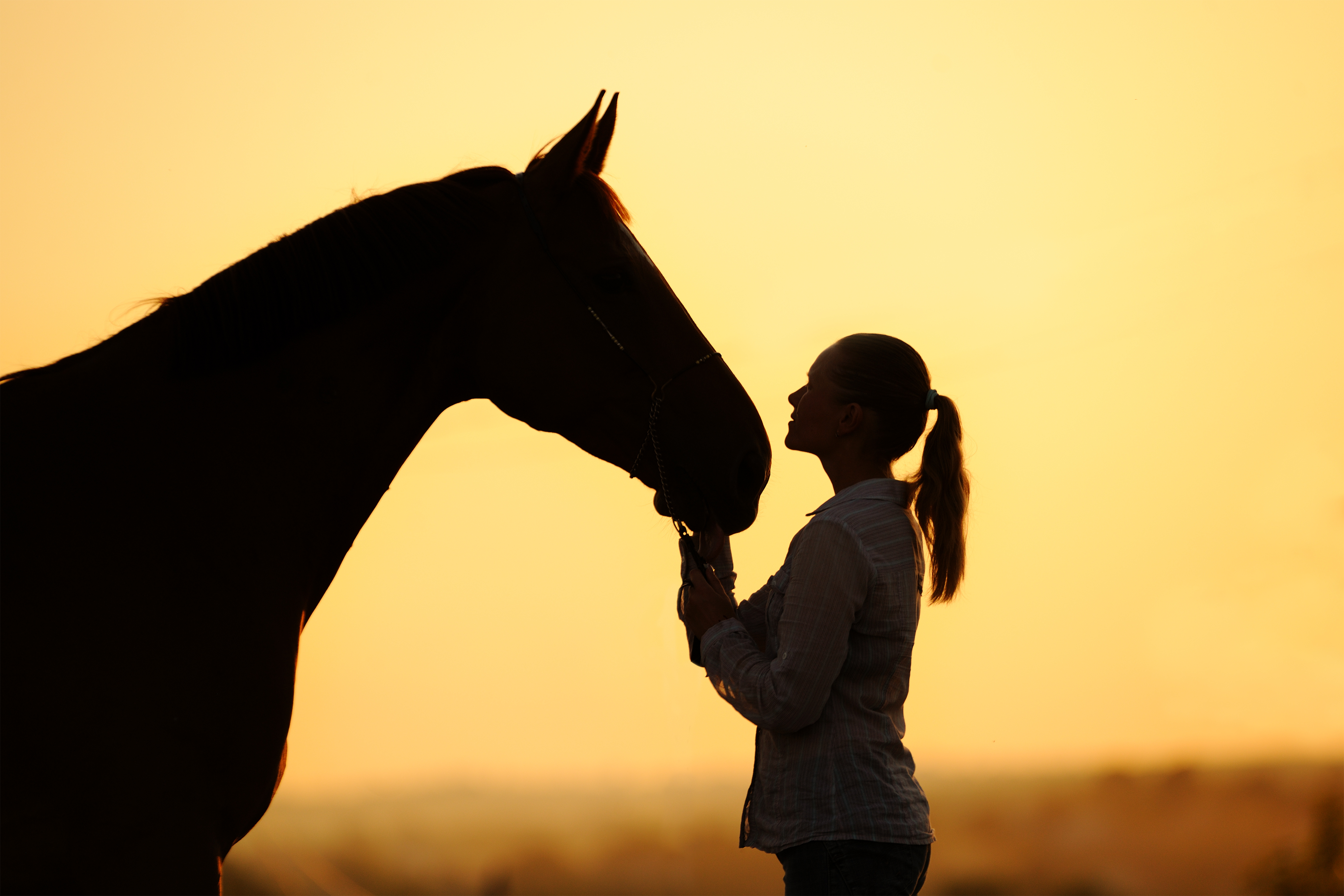 Silhouette of a young  girl with horse  at the sunset_