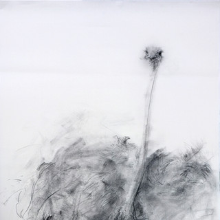 charcoal, pierre noire / 70x135cm / 2016