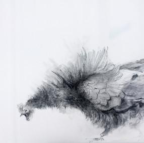 charcoal, pierre noire / 135x70cm / 2016