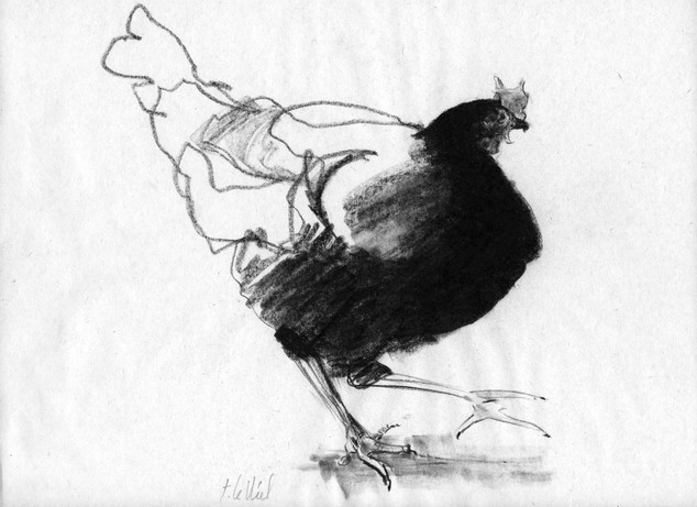 Poule1.jpg