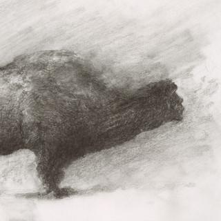 charcoal, pierre noire / 33x24cm / 2016