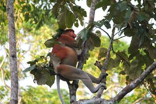 Reasons to visit Sabah, Malaysian Borneo