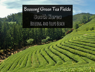 Boseong Green Tea Plantation and Yulpo Beach