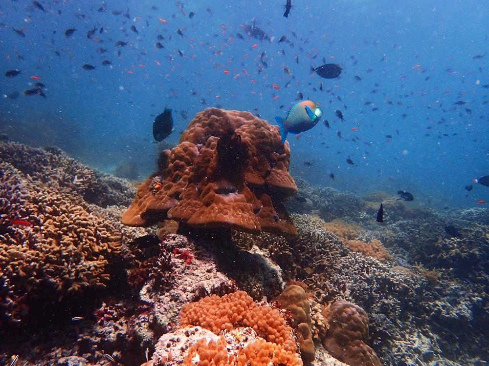 sipadan diving mabul sabah malaysia borneo