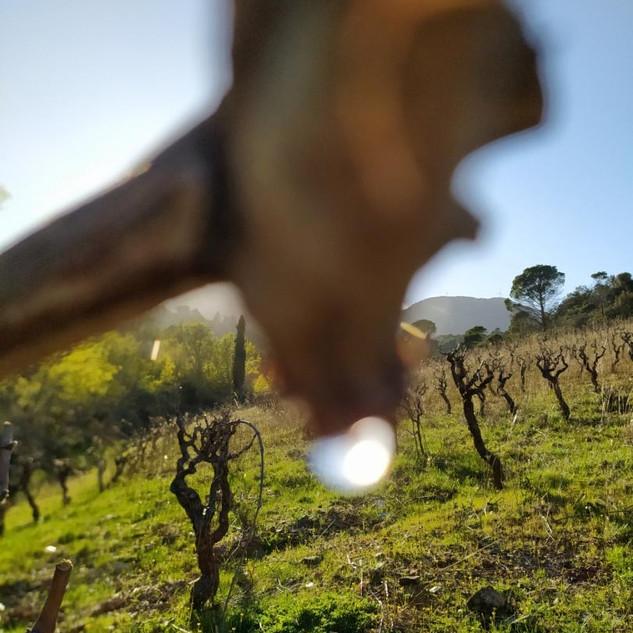 Sarrat d'En Sol AOP Fitou vin