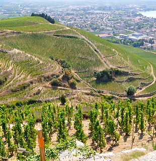 Formation vin de la Vallée du Rhône