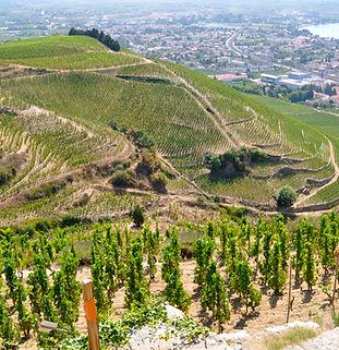 Connaître les vin de la Vallée du Rhône