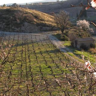 Sarrat d'En Sol Gîte à Tuchan vin Fitou