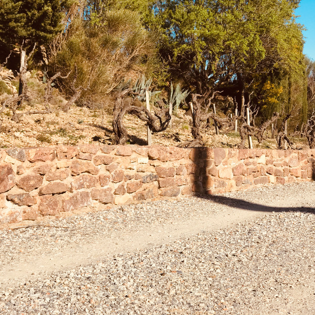 Sarrat d'en Sol Vigneron et gîte rurale