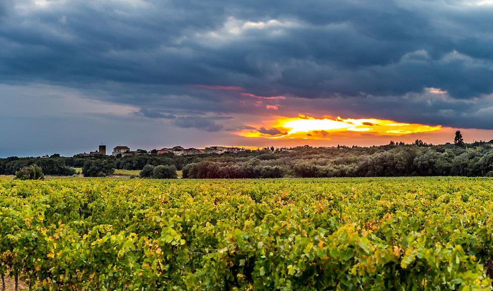 Terroir des vins de Saint-Chinian
