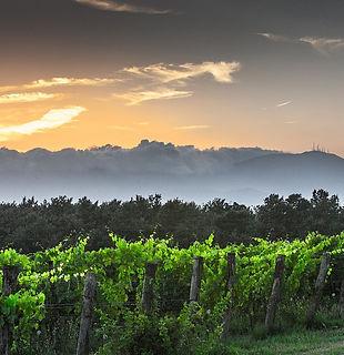 Master Level Sud de France - Formation diplomante vin Languedoc-Roussillon à Montpellier