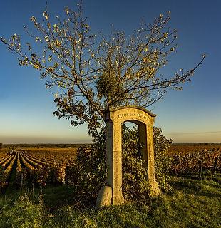 Formation vin de Bourgogne Montpellier