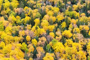 Overhead Trees 1.jpg