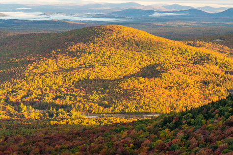 foliage view 4 (1 of 1).jpg