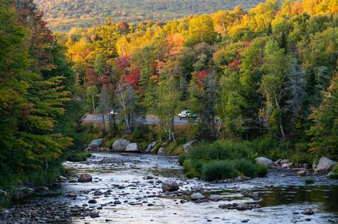 river foliage (1 of 1).jpg